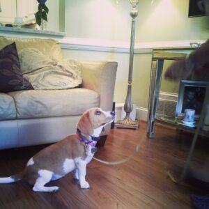 Dog Obedience Training Cincinnati Reviews